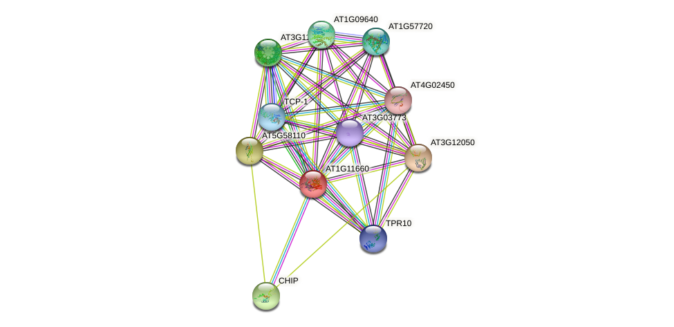 AT1G11660 protein (Arabidopsis thaliana) - STRING interaction network
