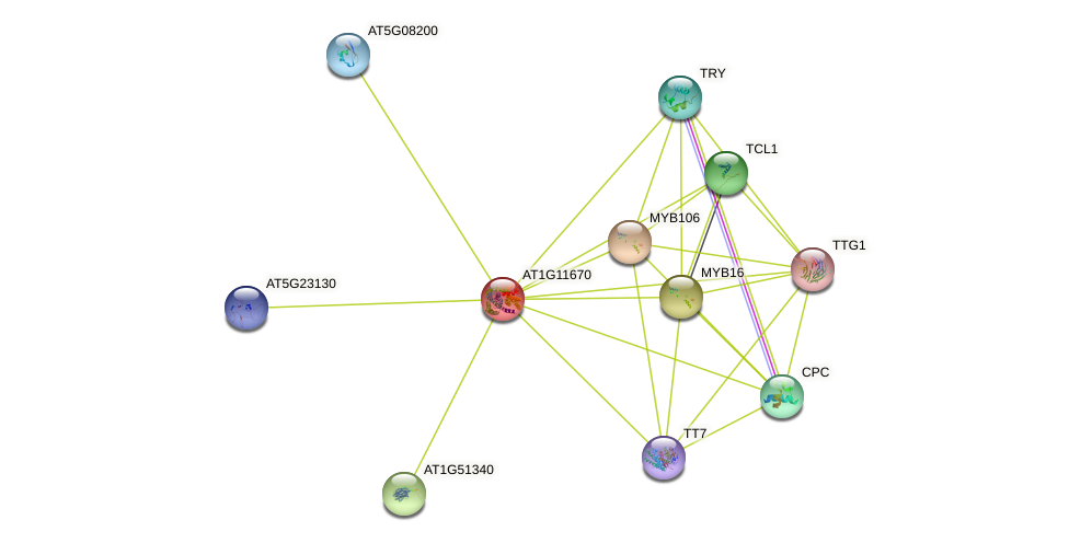AT1G11670 protein (Arabidopsis thaliana) - STRING interaction network