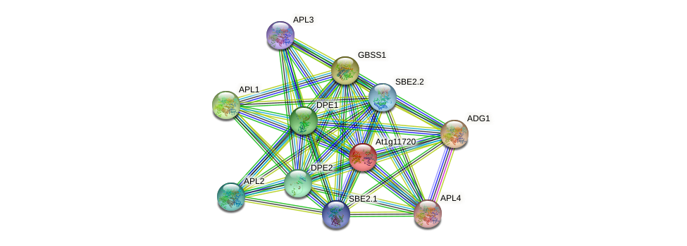 At1g11720 protein (Arabidopsis thaliana) - STRING interaction network