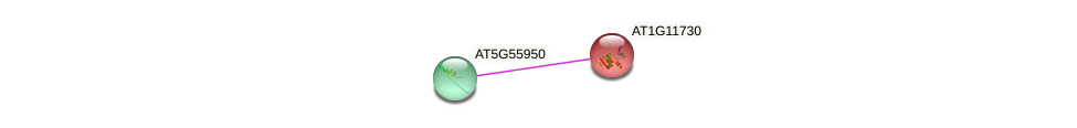 AT1G11730 protein (Arabidopsis thaliana) - STRING interaction network