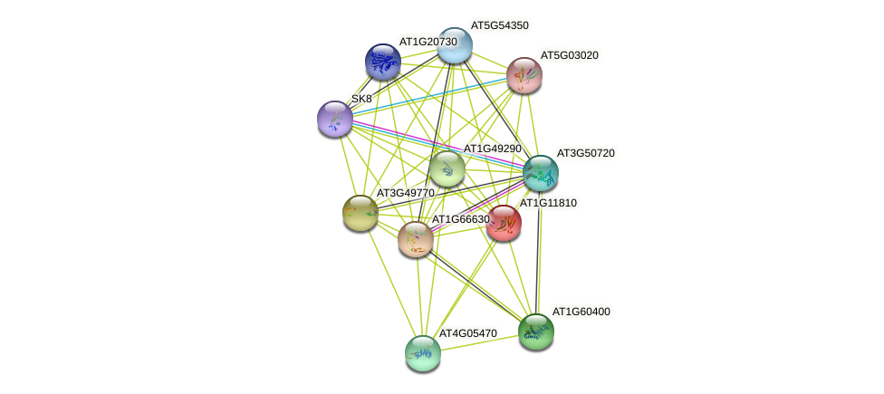 AT1G11810 protein (Arabidopsis thaliana) - STRING interaction network