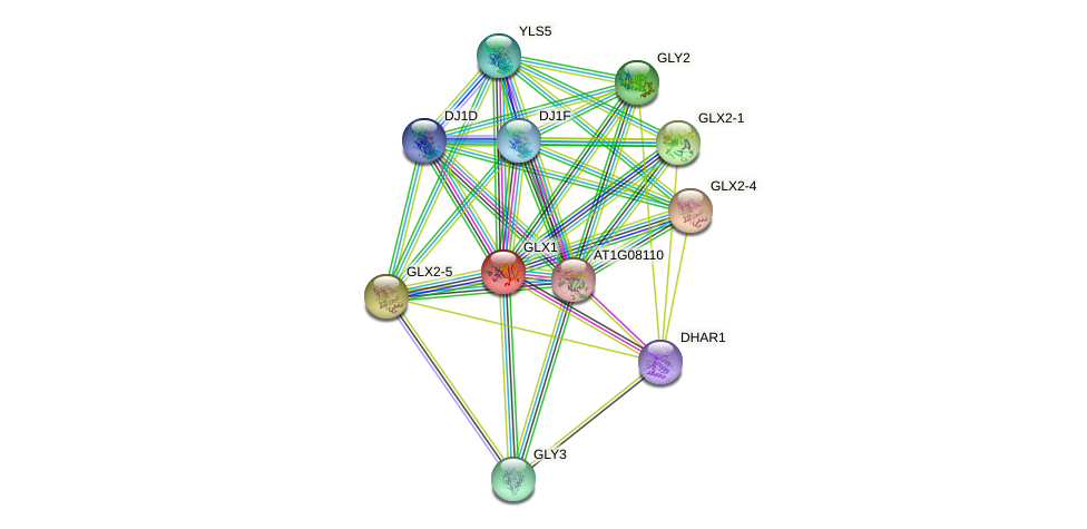 GLX1 protein (Arabidopsis thaliana) - STRING interaction network