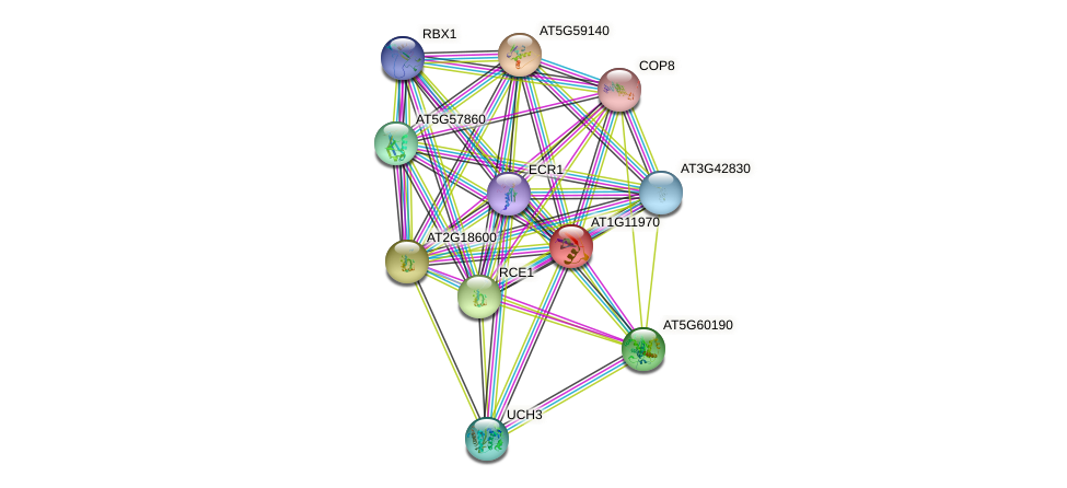 AT1G11970 protein (Arabidopsis thaliana) - STRING interaction network