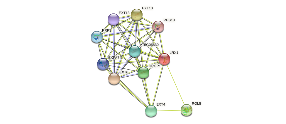 LRX1 protein (Arabidopsis thaliana) - STRING interaction network