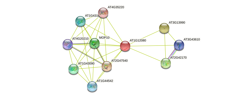 AT1G12080 protein (Arabidopsis thaliana) - STRING interaction network
