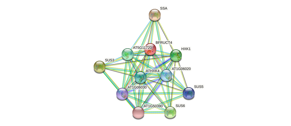 BFRUCT4 protein (Arabidopsis thaliana) - STRING interaction network