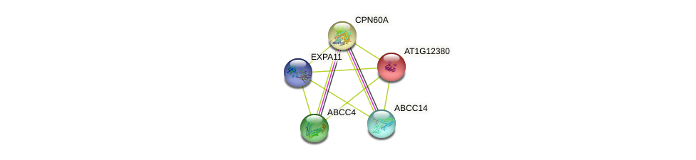 AT1G12380 protein (Arabidopsis thaliana) - STRING interaction network
