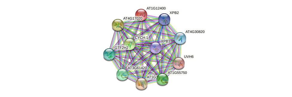 AT1G12400 protein (Arabidopsis thaliana) - STRING interaction network