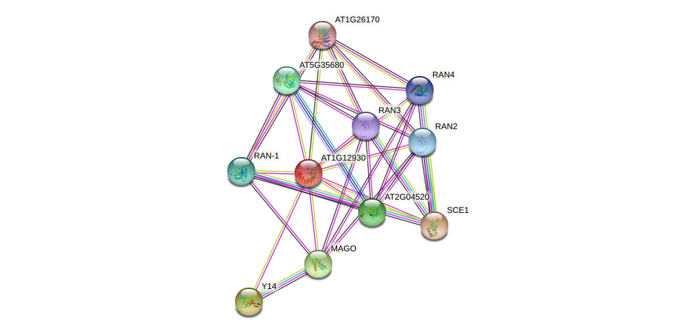AT1G12930 protein (Arabidopsis thaliana) - STRING interaction network