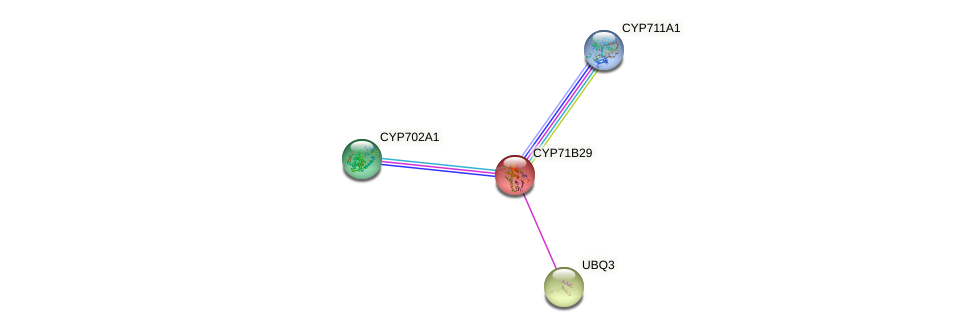 CYP71B29 protein (Arabidopsis thaliana) - STRING interaction network