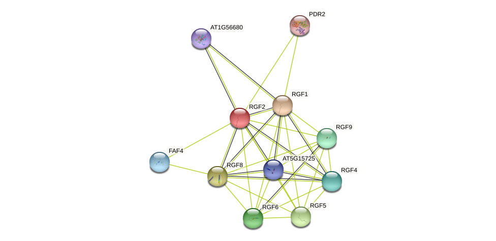 RGF2 protein (Arabidopsis thaliana) - STRING interaction network