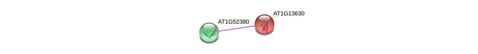AT1G13630 protein (Arabidopsis thaliana) - STRING interaction network