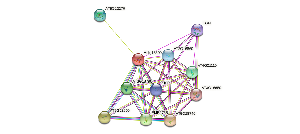 At1g13690 protein (Arabidopsis thaliana) - STRING interaction network