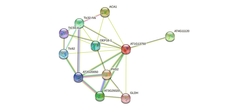 AT1G13750 protein (Arabidopsis thaliana) - STRING interaction network