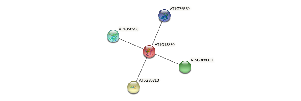 AT1G13830 protein (Arabidopsis thaliana) - STRING interaction network