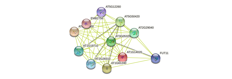 AT1G14020 protein (Arabidopsis thaliana) - STRING interaction network