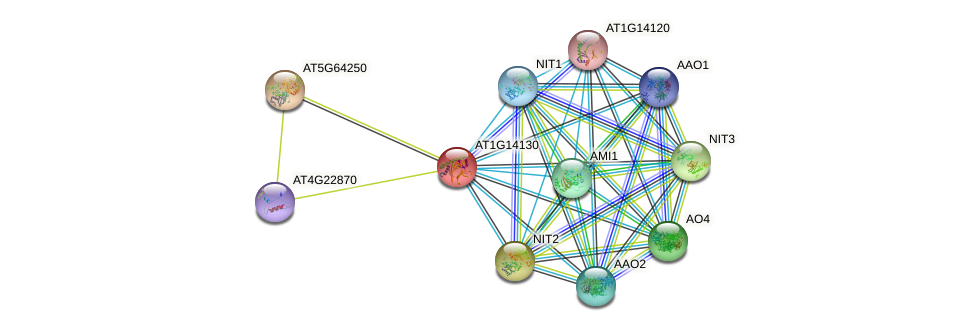 AT1G14130 protein (Arabidopsis thaliana) - STRING interaction network