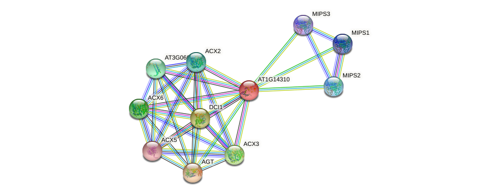 AT1G14310 protein (Arabidopsis thaliana) - STRING interaction network