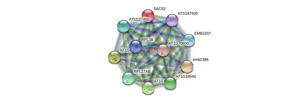 SAC52 protein (Arabidopsis thaliana) - STRING interaction network