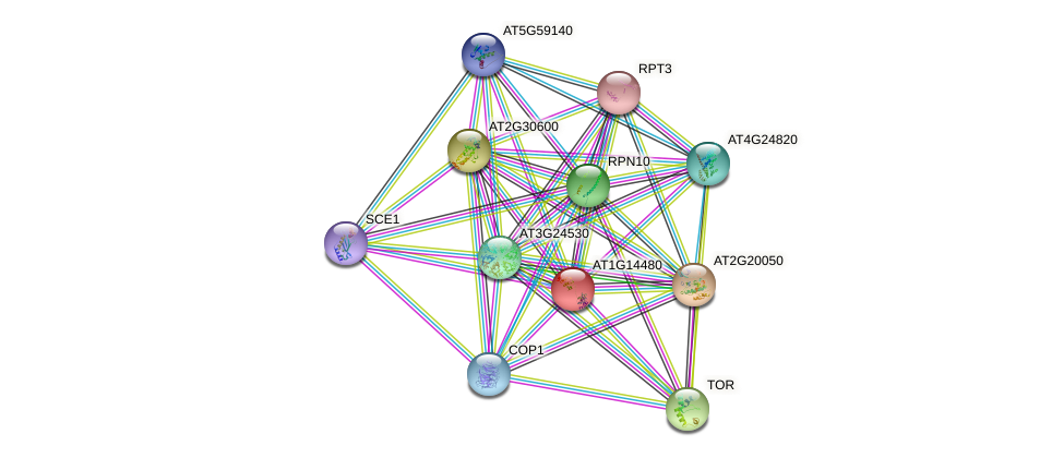 AT1G14480 protein (Arabidopsis thaliana) - STRING interaction network