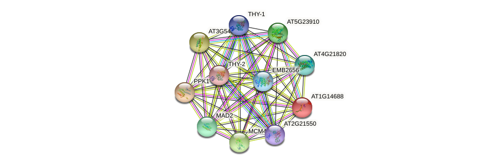AT1G14688 protein (Arabidopsis thaliana) - STRING interaction network