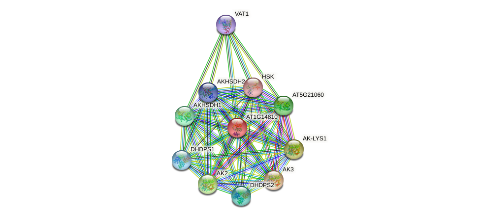 AT1G14810 protein (Arabidopsis thaliana) - STRING interaction network