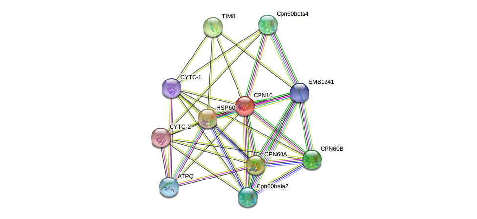 CPN10 protein (Arabidopsis thaliana) - STRING interaction network