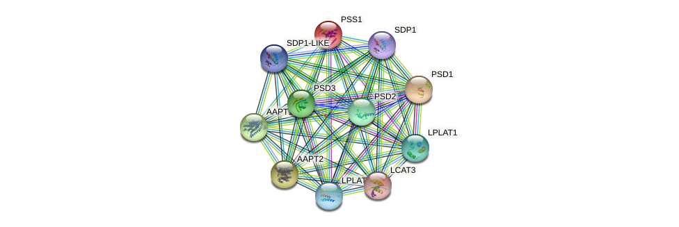 PSS1 protein (Arabidopsis thaliana) - STRING interaction network