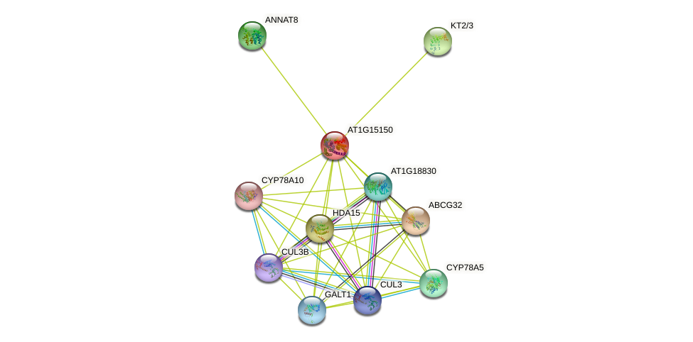 AT1G15150 protein (Arabidopsis thaliana) - STRING interaction network