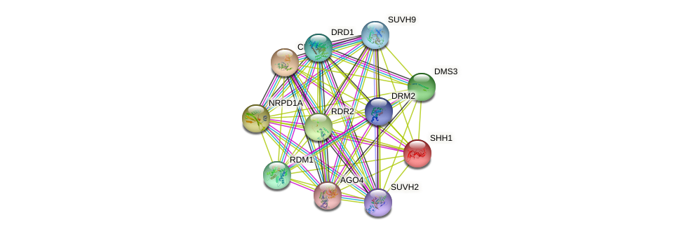 SHH1 protein (Arabidopsis thaliana) - STRING interaction network