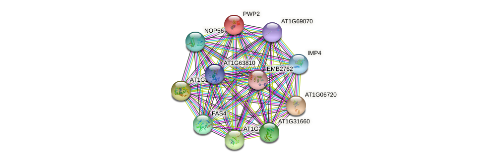 PWP2 protein (Arabidopsis thaliana) - STRING interaction network