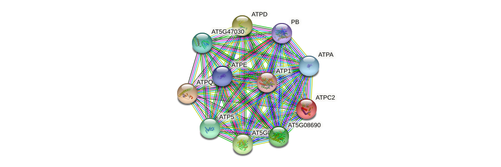 ATPC2 protein (Arabidopsis thaliana) - STRING interaction network