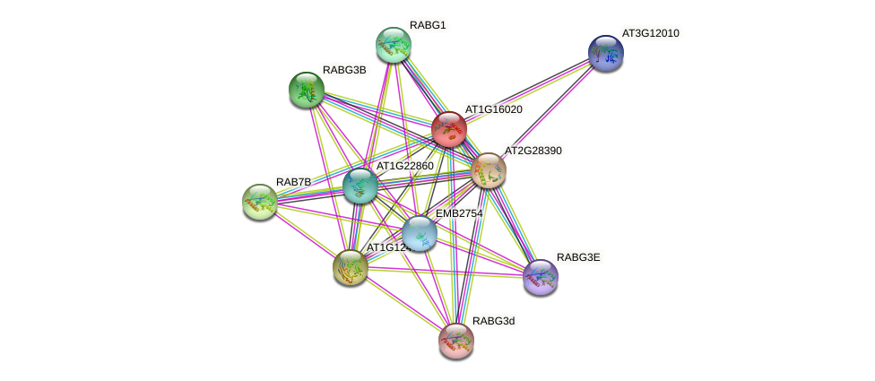 AT1G16020 protein (Arabidopsis thaliana) - STRING interaction network