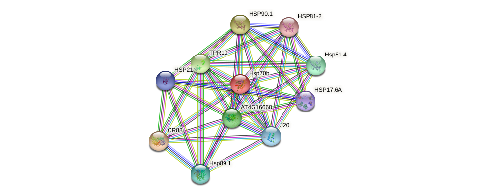Hsp70b protein (Arabidopsis thaliana) - STRING interaction network