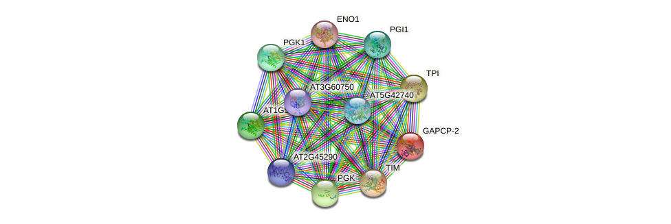 GAPCP-2 protein (Arabidopsis thaliana) - STRING interaction network