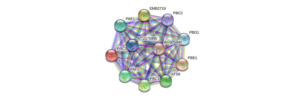 PRC3 protein (Arabidopsis thaliana) - STRING interaction network