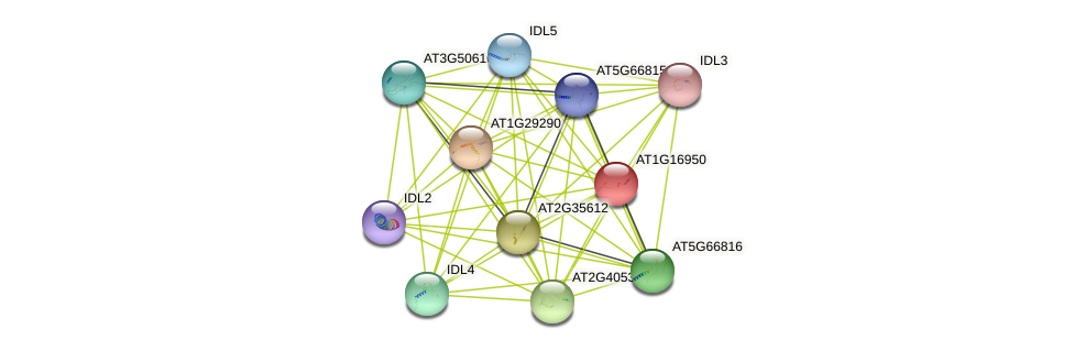 AT1G16950 protein (Arabidopsis thaliana) - STRING interaction network