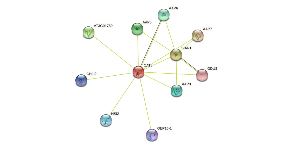 CAT8 protein (Arabidopsis thaliana) - STRING interaction network
