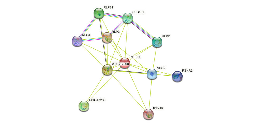 RTFL11 protein (Arabidopsis thaliana) - STRING interaction network