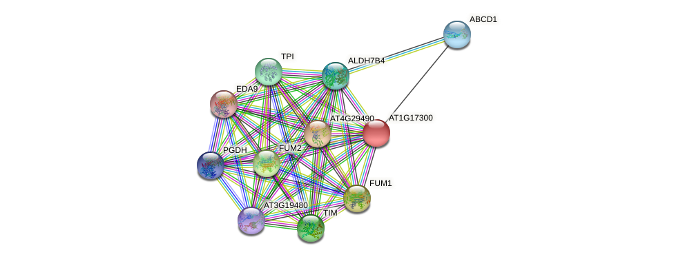 AT1G17300 protein (Arabidopsis thaliana) - STRING interaction network