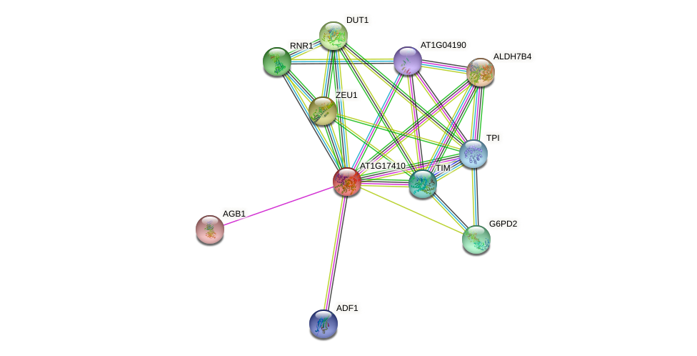 AT1G17410 protein (Arabidopsis thaliana) - STRING interaction network