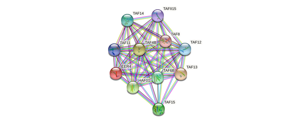 EER4 protein (Arabidopsis thaliana) - STRING interaction network