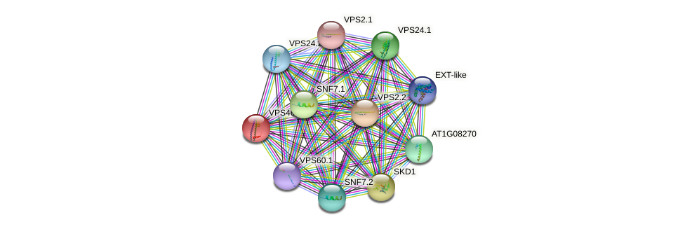 VPS46.1 protein (Arabidopsis thaliana) - STRING interaction network