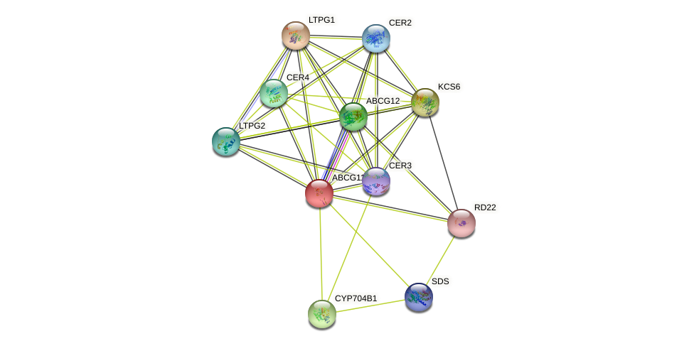 ABCG11 protein (Arabidopsis thaliana) - STRING interaction network