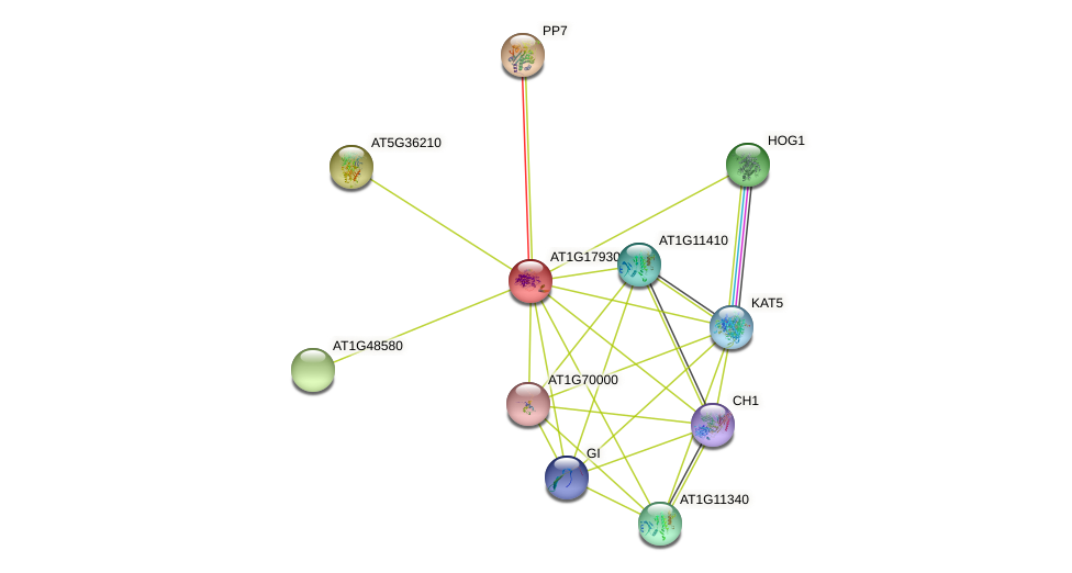 AT1G17930 protein (Arabidopsis thaliana) - STRING interaction network