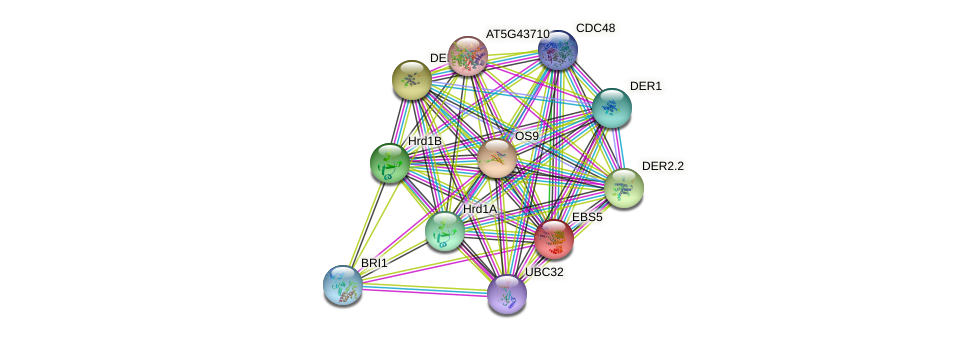 EBS5 protein (Arabidopsis thaliana) - STRING interaction network