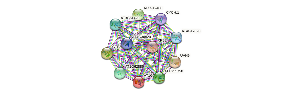 AT1G18340 protein (Arabidopsis thaliana) - STRING interaction network