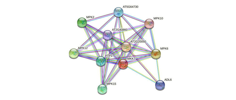 MKK7 protein (Arabidopsis thaliana) - STRING interaction network