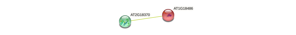 AT1G18486 protein (Arabidopsis thaliana) - STRING interaction network