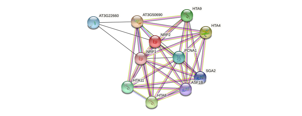 NRP2 protein (Arabidopsis thaliana) - STRING interaction network